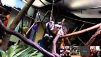 """""""Biodiversity in Peril"""" a Connected Classrooms VFT at Liberty Science Center"""