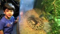 Liberty Science Center Part 2 The Animal Center Snakes Turtle Tarantula  Marcelo and wild animals